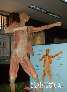 探索生命科学大型人体奥秘科普展 在湖北展出