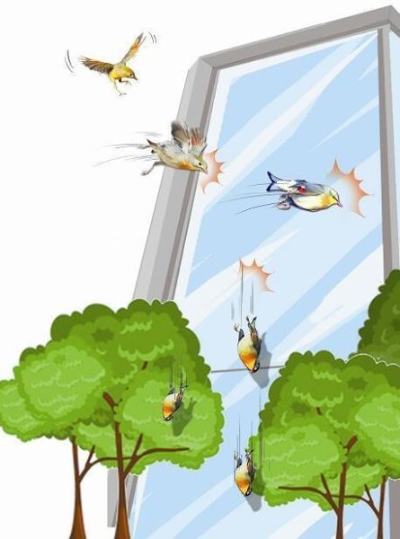 中新网湖北湖北新闻网咸宁多只相思鸟漫画撞Ipad看本地集体图片