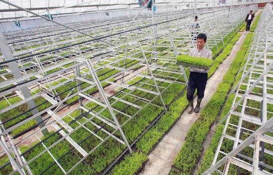 智慧农业-育秧工厂