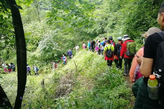 300余位徒步爱好者在蛇草坪徒步