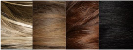 图为用于全基因组关联分析的头发颜色分类 中科院供图