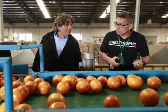 客商在宜昌市夷陵区柑橘专业合作社参观 乾龙摄