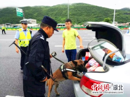 警犬训导员熊克霜正在执行搜毒任务