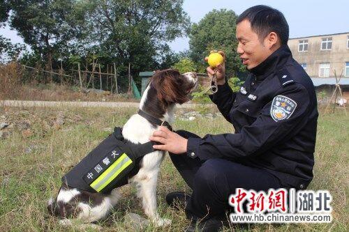 """中新网湖北 湖北新闻网 鄂州80后警犬训导员和他的""""无言战友"""""""