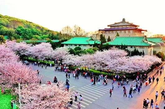 3月20日,武汉大学的赏樱人群。(湖北日报全媒记者 倪娜 摄)