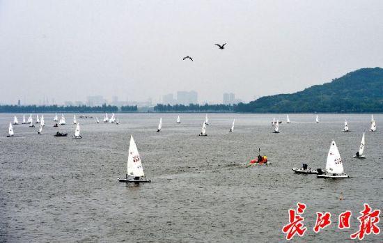 第七届世界军人运动会帆船测试赛暨2019年全国青年帆船锦标赛现场。记者喻志勇 摄