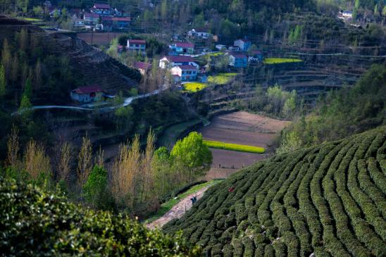 晏山村茶场