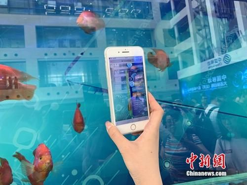 5G智慧鱼缸。中新网 吴涛 摄