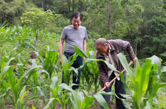 姚刚和村民在玉米地里交谈