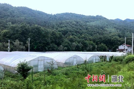 保康县黄堡镇寨湾村的蔬菜大棚 孙鸿宇摄