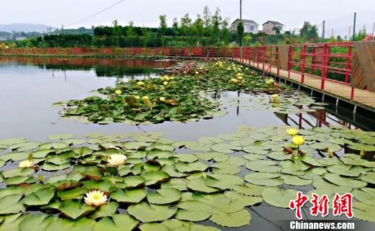 """贵子湖从一潭死水变成了如今的""""湖心花园"""" 受访者供图"""