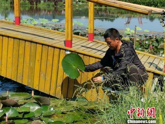 梁智博在贵子湖查看水生植物的生长情况 受访者供图