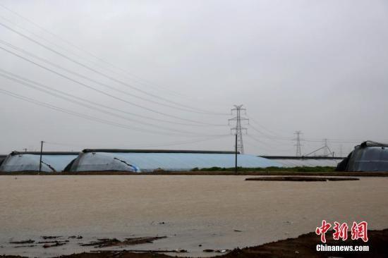 """8月12日,受台风""""利奇马""""影响,山东寿光及周边县市普降特大暴雨,不少蔬菜大棚被积水围困。中新社记者 梁�� 摄"""