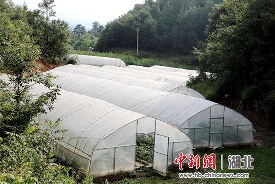 村集体发展的10座蔬菜大棚