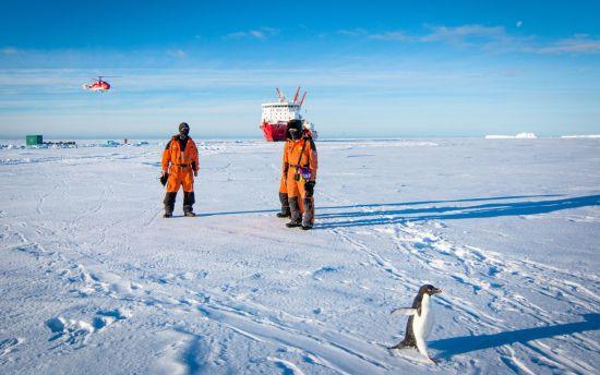 一只阿德雷企鹅从考察队员身边路过。中国极地研究中心 李航 摄