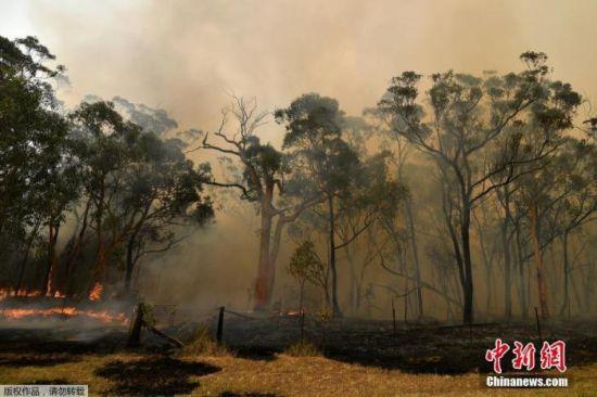 当地时间2019年12月10日,澳大利亚悉尼,新南威尔士州大火持续蔓延,悉尼上空烟雾弥漫。
