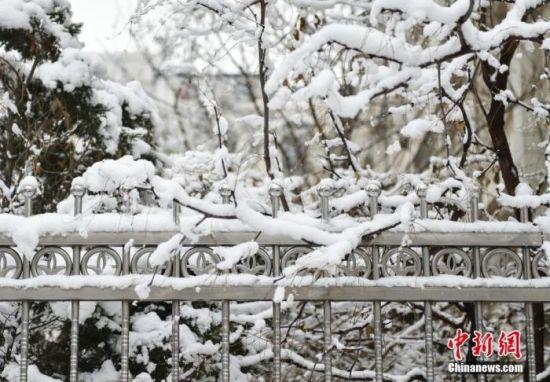 """资料图:1月5日晚,北京2020年第一场雪如期""""到货"""",全市普降中到大雪。 中新网记者 翟璐 摄"""