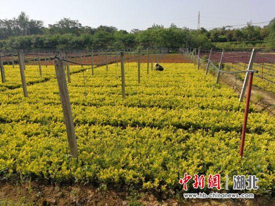 http://www.whtlwz.com/tiyuyundong/107519.html