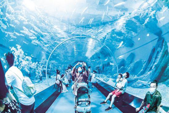 昨日,武汉海昌极地海洋公园迎来客流小高峰。游客们观看了潜水员身着古装在水中起舞、北极熊吃特制粽子等节目。楚天都市报记者李辉摄