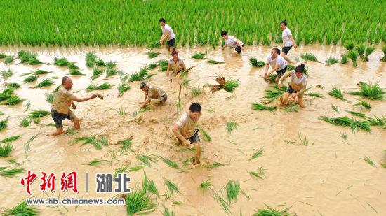 """枝江办""""泥仓子""""农耕文化旅游节庆丰收 周星亮 摄"""