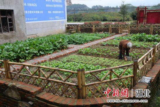 废弃宅地建成经典小菜园