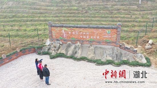 武汉工程大学邮电与信息工程学院3名驻村队员察看刚刚完成品改的柑橘基地 朱灿义 摄
