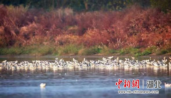 东西湖府河湿地柏泉段 冯江 摄