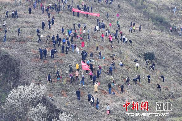 湖北武当山:志愿者义务植树播新绿 贺永 摄