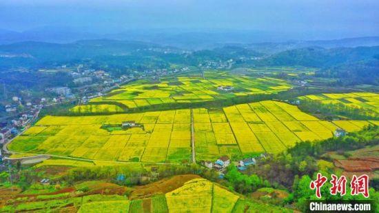 宜昌市夷陵区分乡镇南垭千亩油菜花田。 周星亮 摄