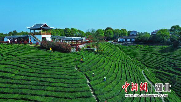 第五届青龙山文化艺术节将于4月3日开幕 周星亮 摄