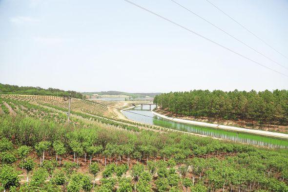 全长68公里的丹渠沿岸栽种着樱花、银杏、红叶石楠等苗木多达57个品种、150余万株。