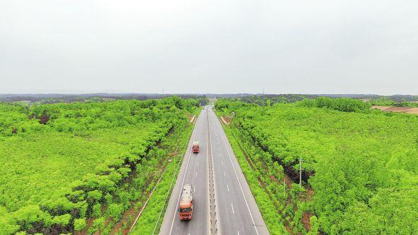 316国道老河口段两侧绿树成荫,单侧绿化最大宽度达到1120米。 (本栏图片均为通讯员 马应华 摄)