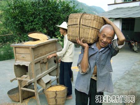 图:金秋农家丰收忙