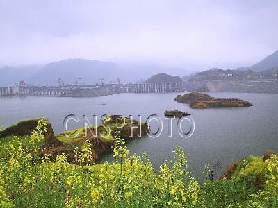长江三峡冲向154米水位 坝前半岛成明礁