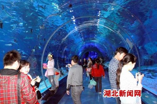 图:武汉极地海洋公园观光热