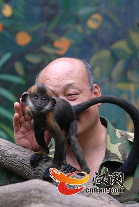 武汉动物园保育员舔猴屁股一小时