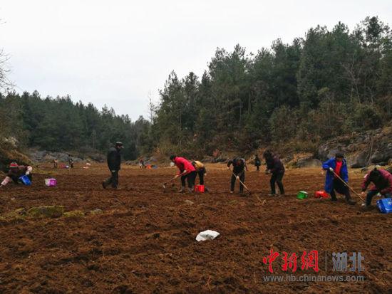 北京赛车pk10冠军规律:恩施女子返乡创业_带领乡亲致富(图)