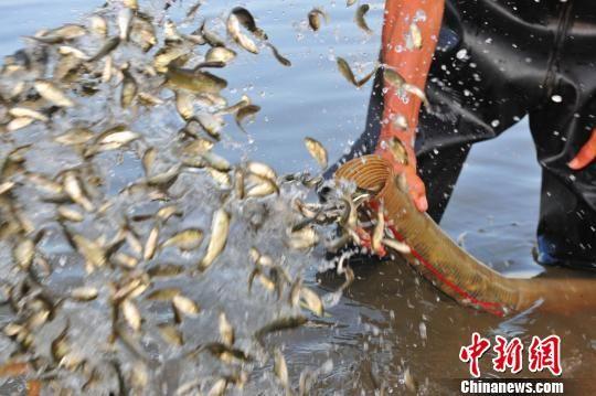 大通彩票的网址是什么:长江宜昌流域非法捕捞刑事附带民事公益诉讼案宣判