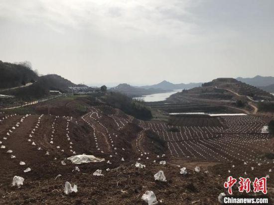 湖北十堰:退耕还湿助力库区生态大保护