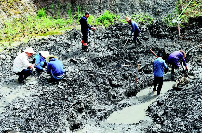 松滋古生物化石又有新发现