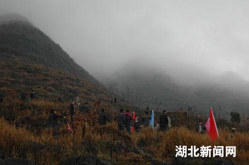 湖北新闻网 新农村 图:来凤县大河镇植树造林绿化
