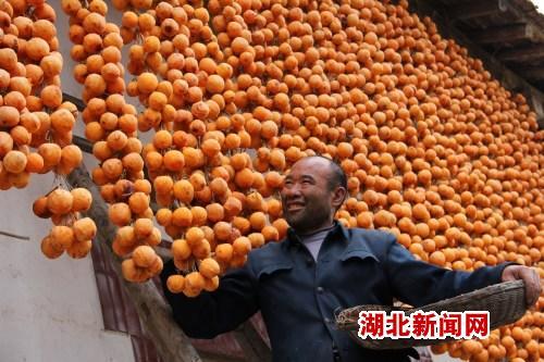 金秋柿子丰收